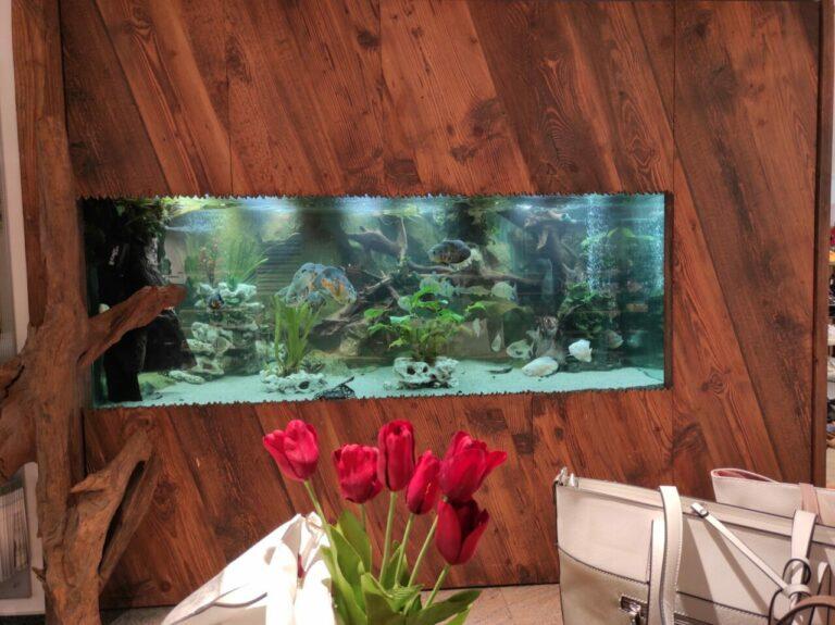 Schuhaus Dietle - Aquarium